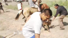 Dog bites can't stop Native American blockade of Dakota Access pipeline